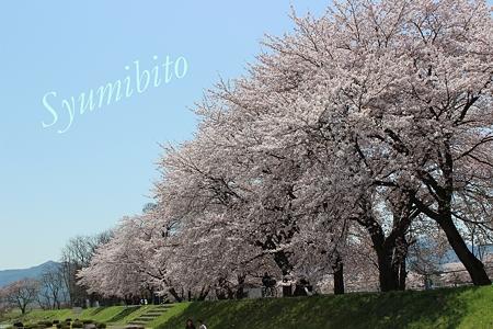 2012.4.28 桜 2