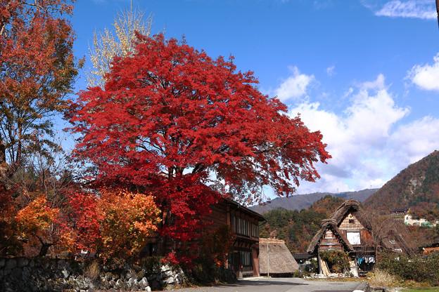 写真: 『清秋。。。』