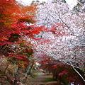 『春×秋』 ~愛知県 小原村~