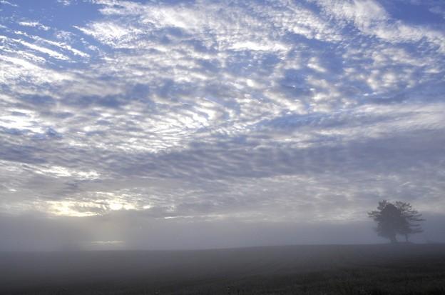 Photos: 霧の中へ