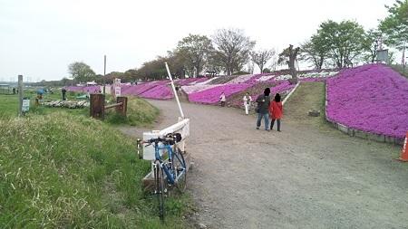 相模川芝桜と自転車