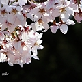 Photos: 乙女色