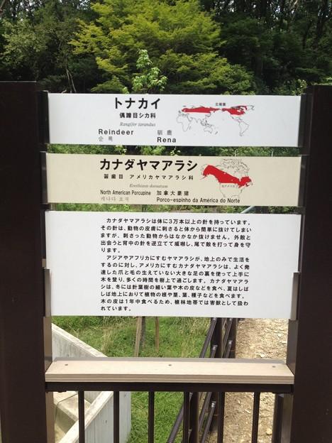 東山動植物園_42:カナダヤマアラシ