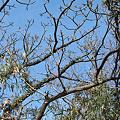 Photos: Tree02222012dp2-01
