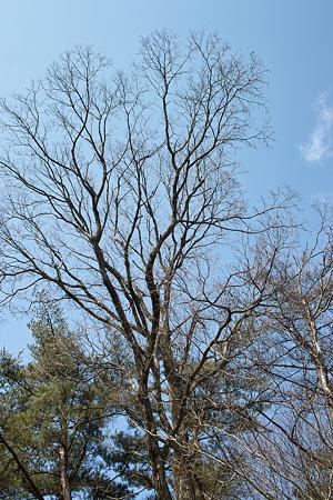 tree03142012dp2-04