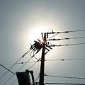 Photos: Sunshine03282012dp2
