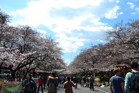 桜の道@上野公園[4/4]