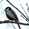 写真: 初鳥撮り