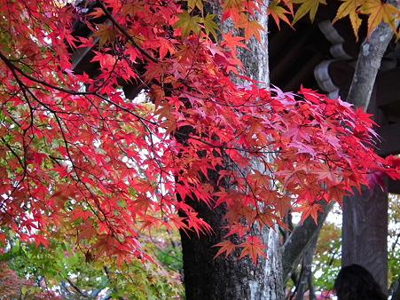 京都 271
