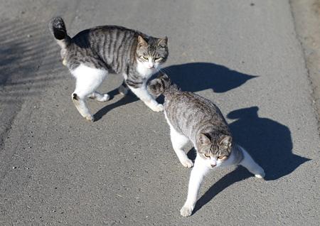 虐げられている猫