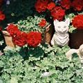 Photos: 石屋の猫