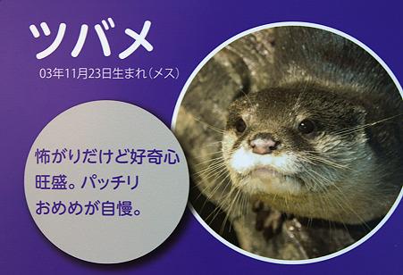 miyajima110806006