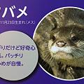 Photos: miyajima110806006