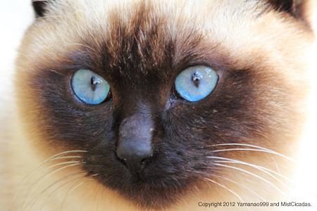 yamanao999_cats_085