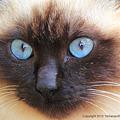 Photos: yamanao999_cats_085