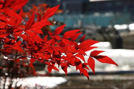 冬の紅葉…