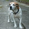芭蕉天神宮に出現した犬
