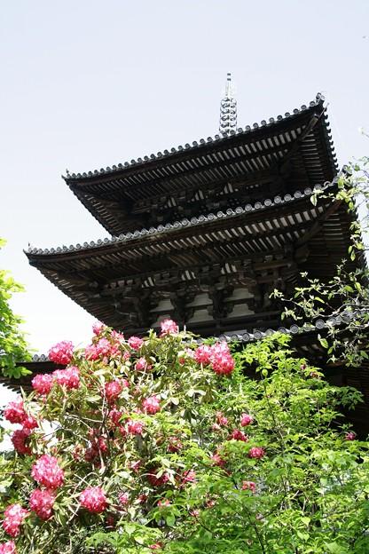 IMG_5460當麻寺・西南院・西南院庭園・石楠花と西塔(国宝)