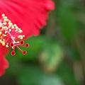 赤いボンボリ