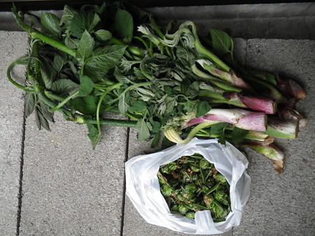 2012/05/02の収穫2