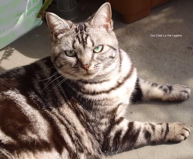 猫と蛇の目は同じ。猫の瞳孔が開いていれば尚更ね。