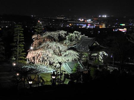 闇夜に浮かぶ安長寺の枝垂れ桜