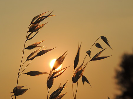 夕陽で輝いて~~