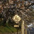 Photos: 春の街角