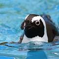 Photos: 泳ぎましょ~♪