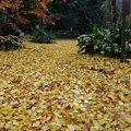 Photos: 観音様の庭