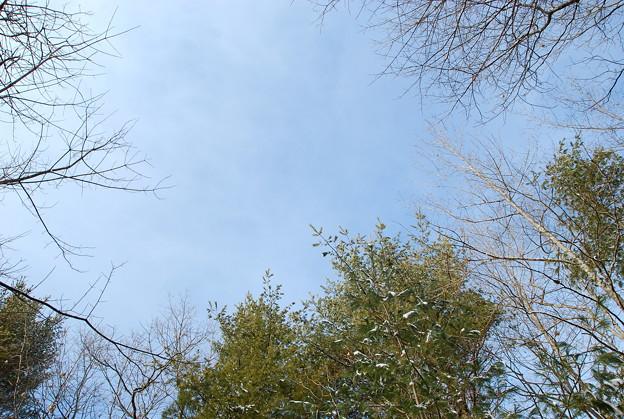 写真: Looking Up...