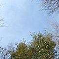 Photos: Looking Up...