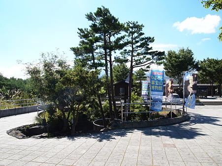 井戸型樹型