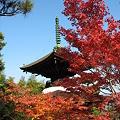 京都2007.常寂光寺2