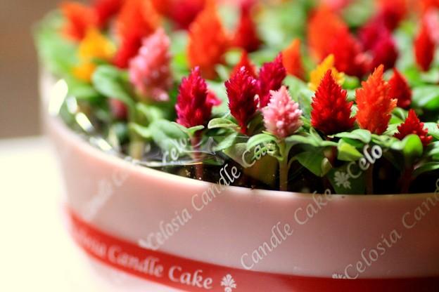Celosia Candle Cake