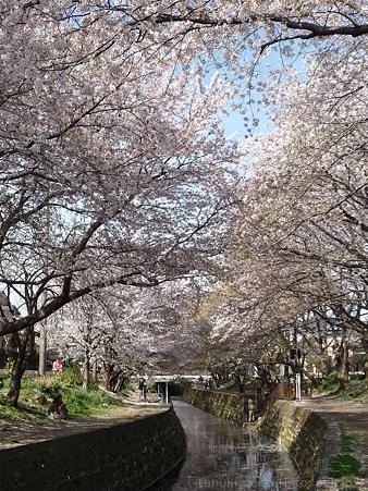 120412-千本桜 (100)