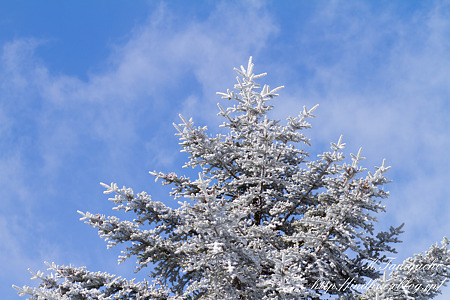 雪 EOS7D EF85 F1.8USM