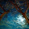 Photos: 月明かりと桜