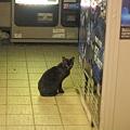 写真: ライヴハウスの黒猫