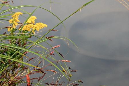 2011.10.25 和泉川 水溜りの脇