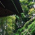 Photos: 2012.06.06 鎌倉 長谷寺 経蔵から眺望散策路
