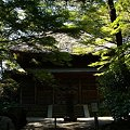 Photos: 秋陽の三渓園 1