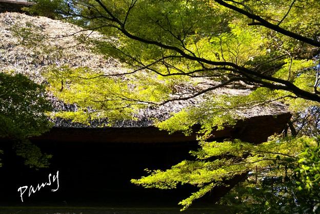 Photos: 秋陽の三渓園 2