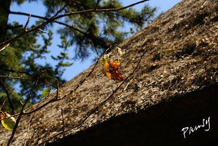 秋陽の三渓園 3