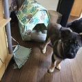 Photos: 子犬の健ちゃん