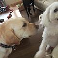 Photos: 犬は苦手