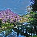 後楽園の桜