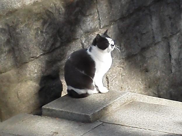 111127 辺津宮前にいた猫
