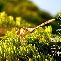 Photos: 秋茜