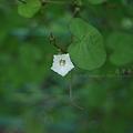 写真: 何の花だっけ?(をい